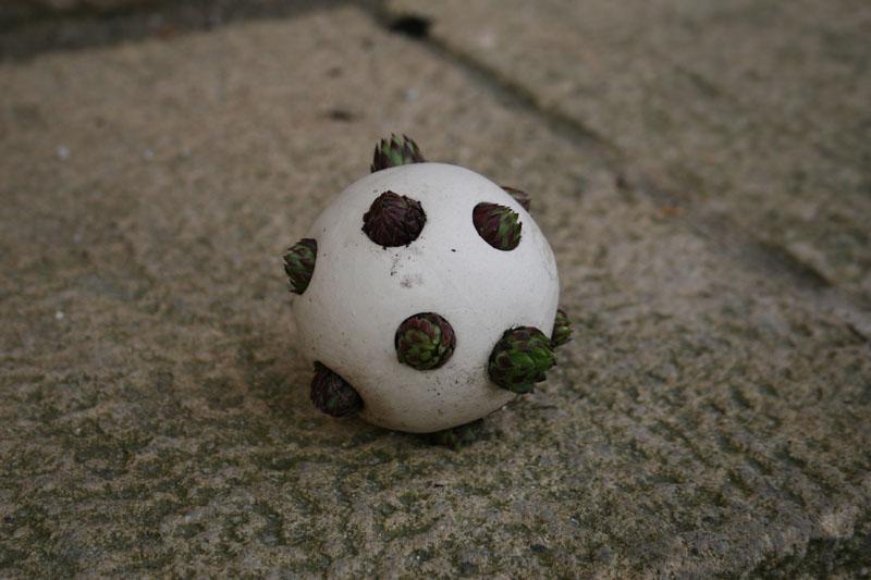 esfera en su primer estado